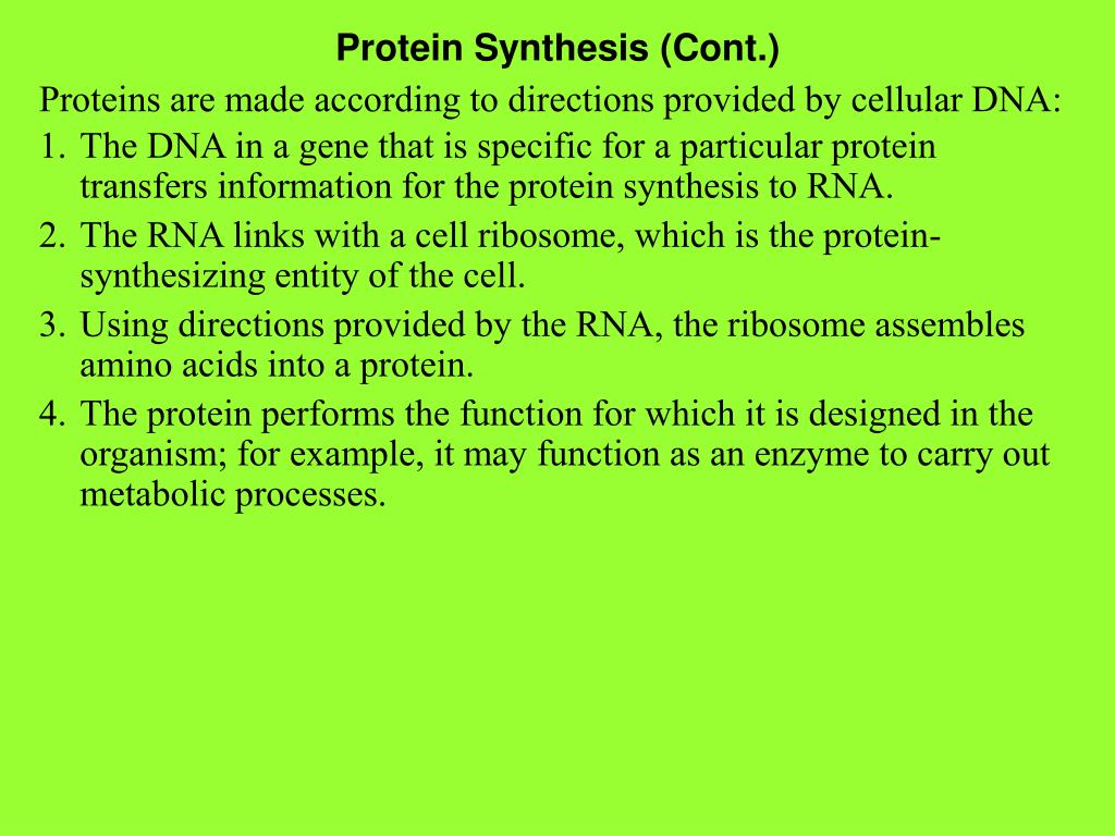 Protein Synthesis (Cont.)