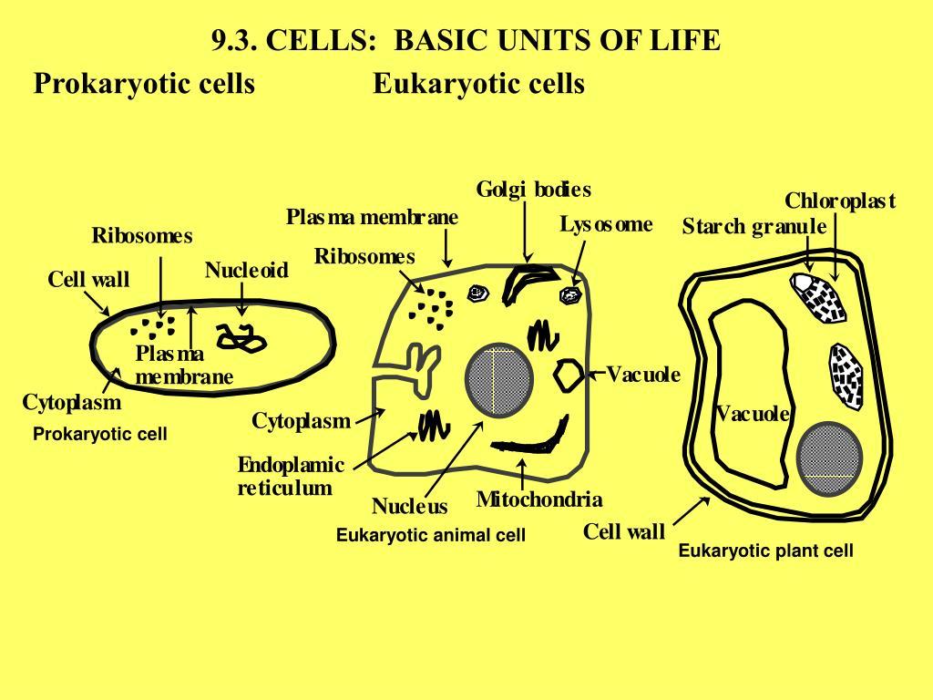 9.3. CELLS:  BASIC UNITS OF LIFE