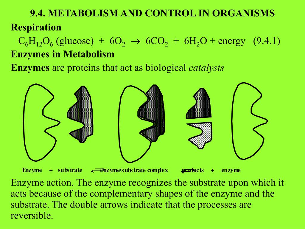 9.4. METABOLISM AND CONTROL IN ORGANISMS