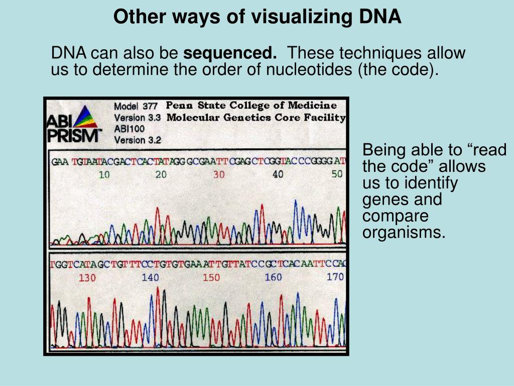 Other ways of visualizing DNA