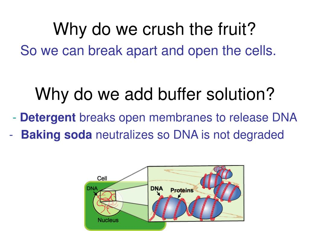 Why do we crush the fruit?