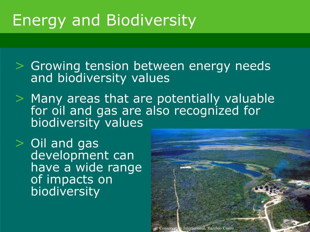 Energy and Biodiversity
