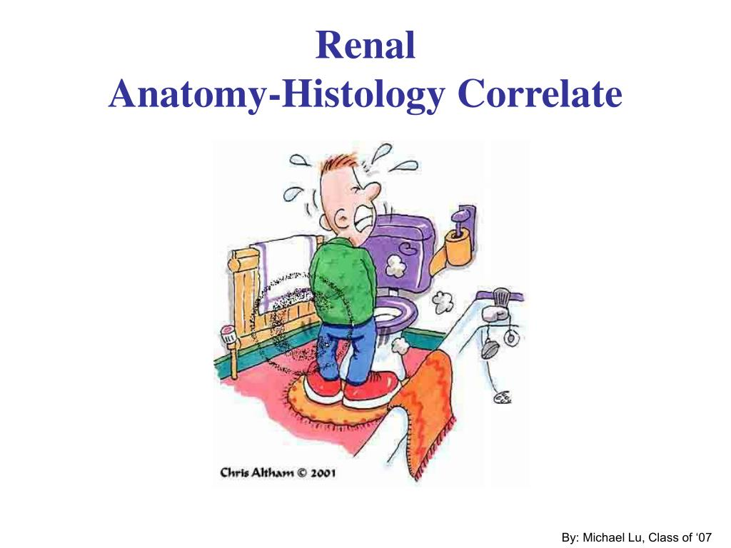 Ppt Renal Anatomy Histology Correlate Powerpoint Presentation Id
