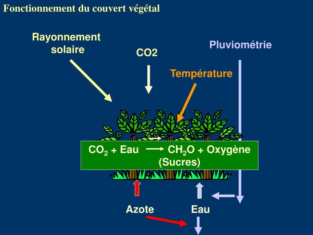 Fonctionnement du couvert végétal