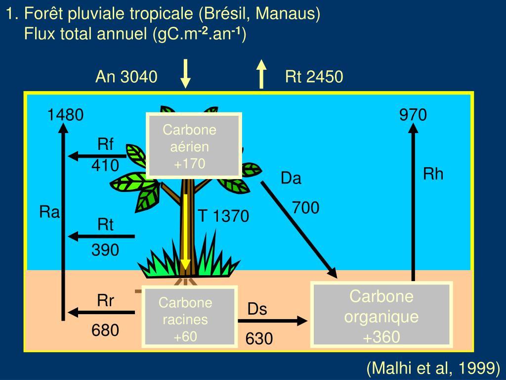 1. Forêt pluviale tropicale (Brésil, Manaus)