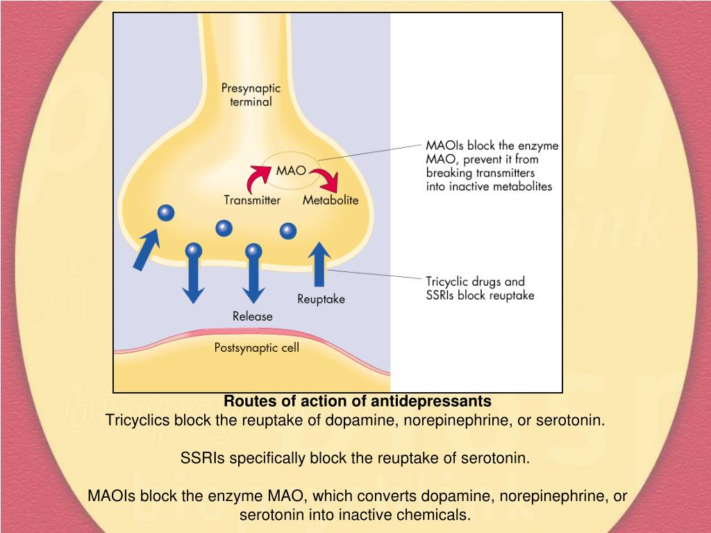 Routes of action of antidepressants