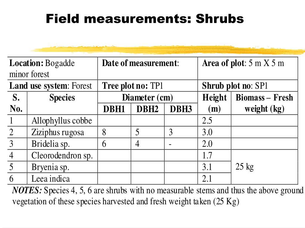 Field measurements: Shrubs