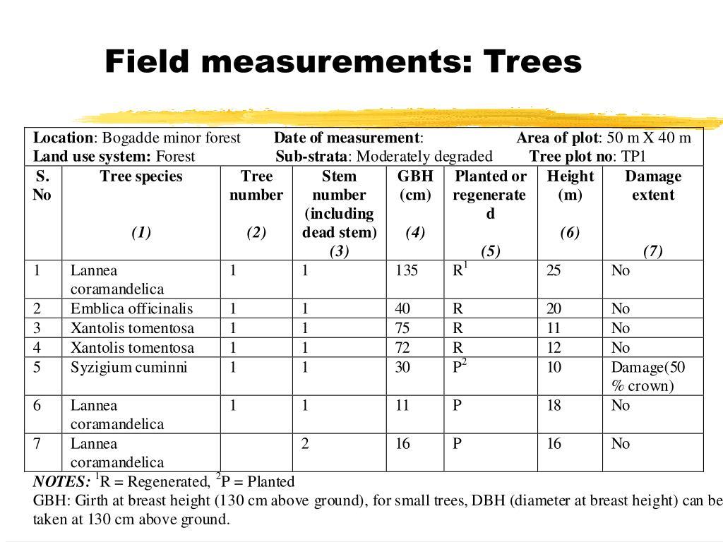 Field measurements: Trees