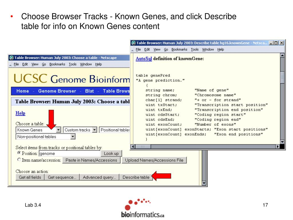 Choose Browser Tracks - Known Genes, and click Describe table for info on Known Genes content