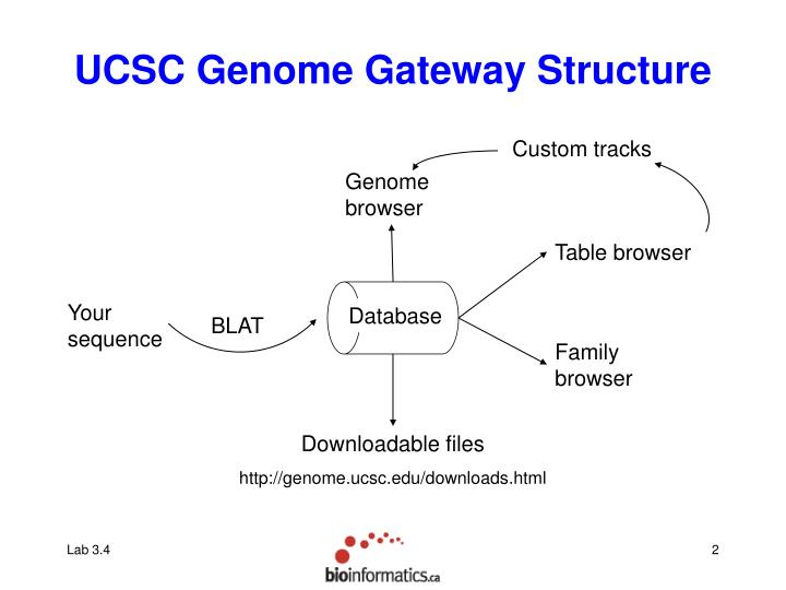 Ucsc genome gateway structure