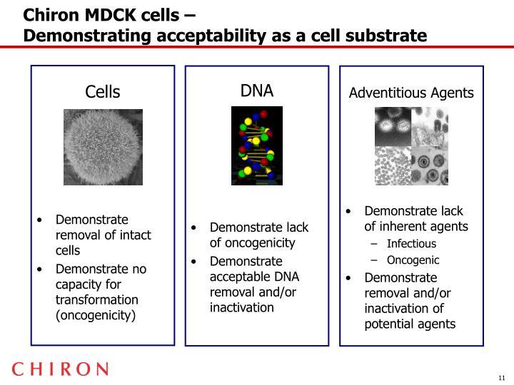Chiron MDCK cells –