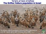 the griffon vulture population in israel