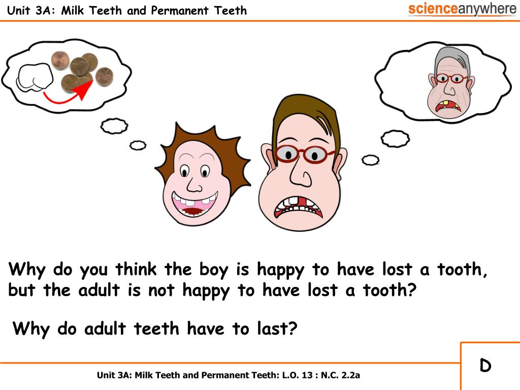 Unit 3A: Milk Teeth and Permanent Teeth