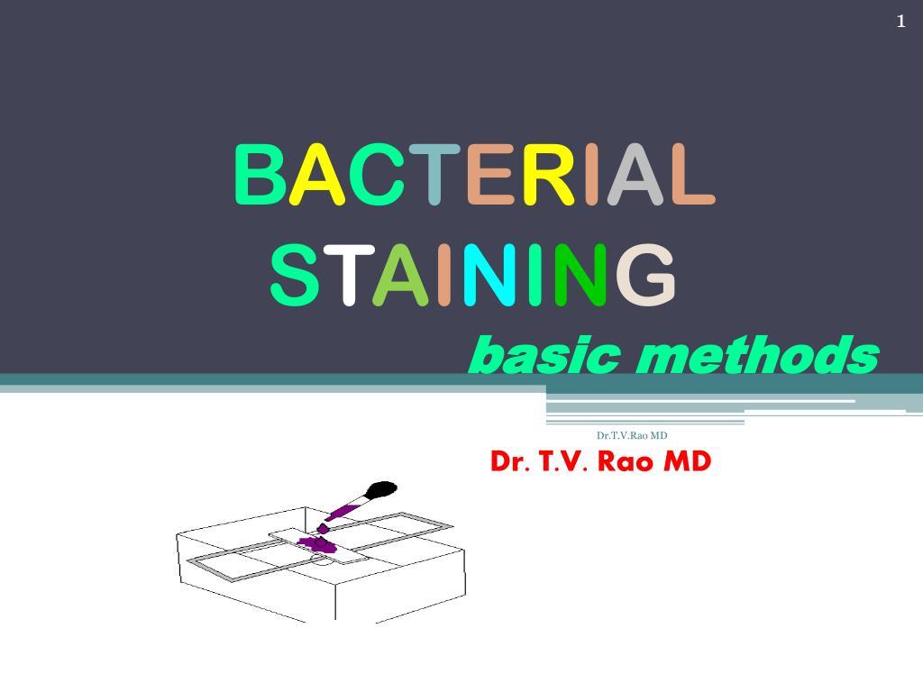b a c t e r i a l s t a i n i n g basic methods l.
