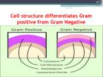 cell structure differentiates gram positive from gram negative