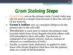 gram staining steps