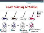 gram staining technique