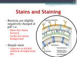 stains and staining