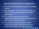 terminal transition in epidermis