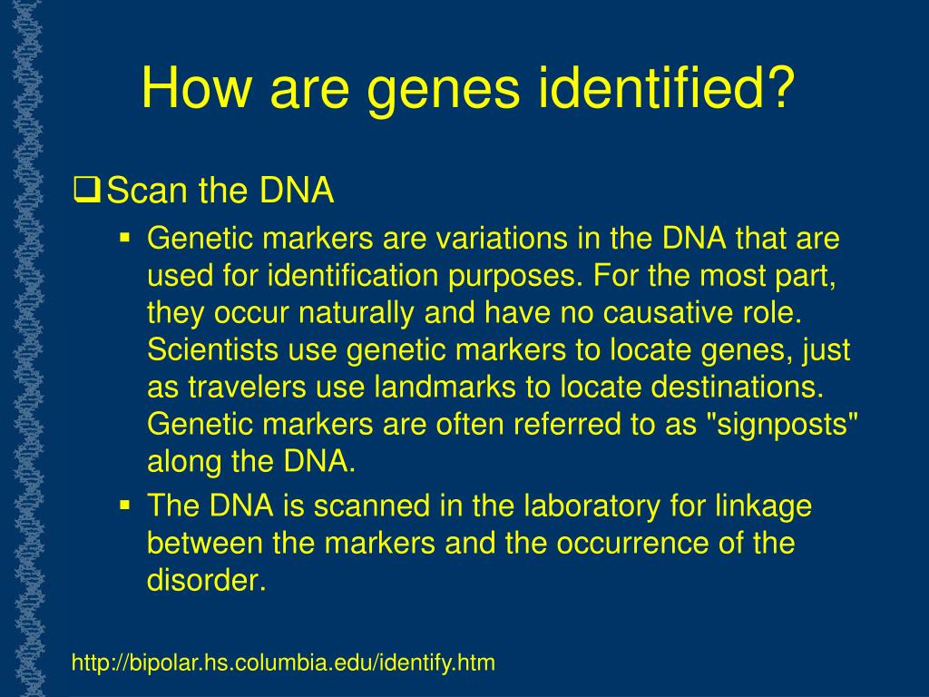 How are genes identified?