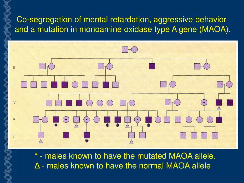 Co-segregation of mental retardation, aggressive behavior and a mutation in monoamine oxidase type A gene (MAOA).