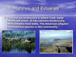 salt marshes and estuaries