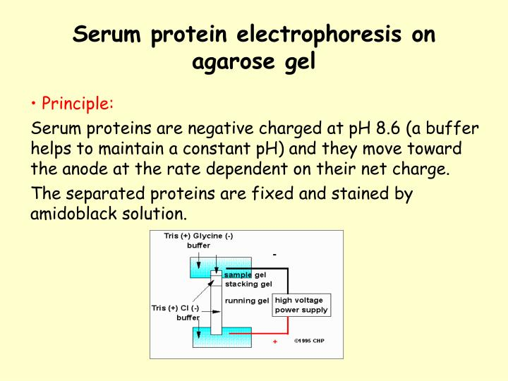 practical for electrophoresis of serum protein 1 electrophoresis of serum proteins in 05% agarose native electrophoresis of serum proteins in agarose gel is still one of the basic examinations in clinical chemistry, and in our practical lesson serves as a general example of electrophoretic separation.