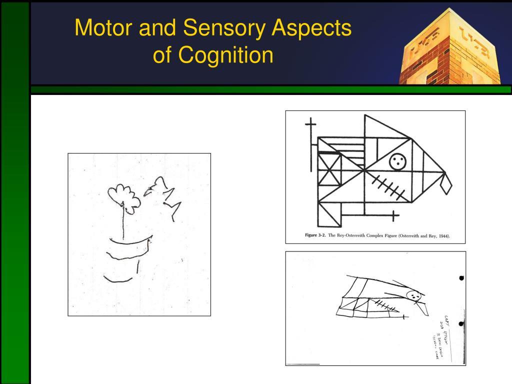 Motor and Sensory Aspects