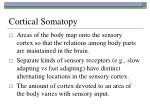 cortical somatopy