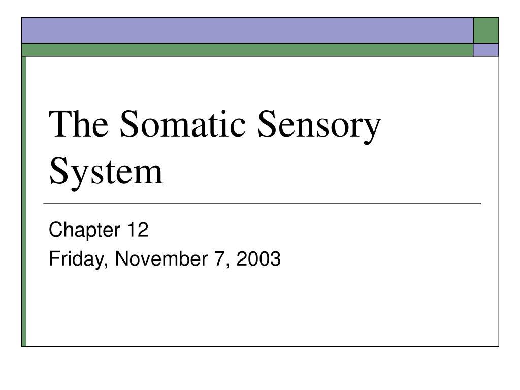 the somatic sensory system l.