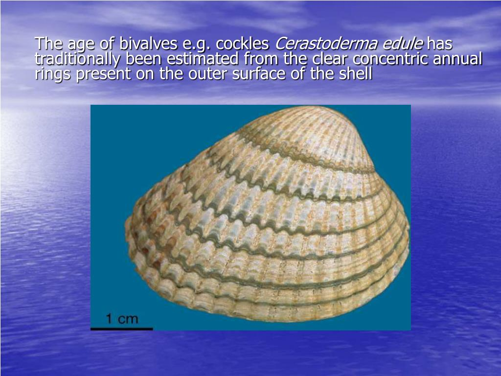 The age of bivalves e.g. cockles