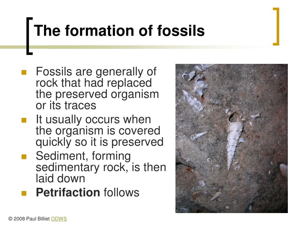 The formation of fossils