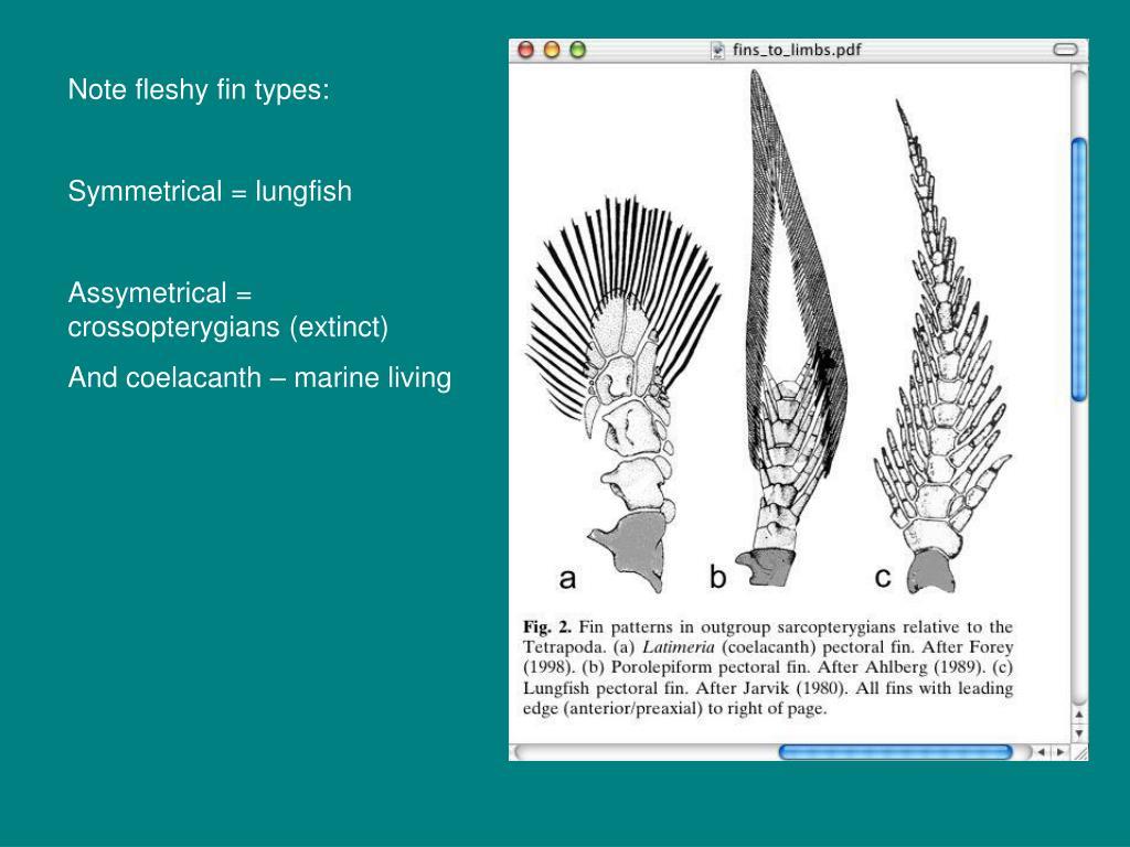 Note fleshy fin types: