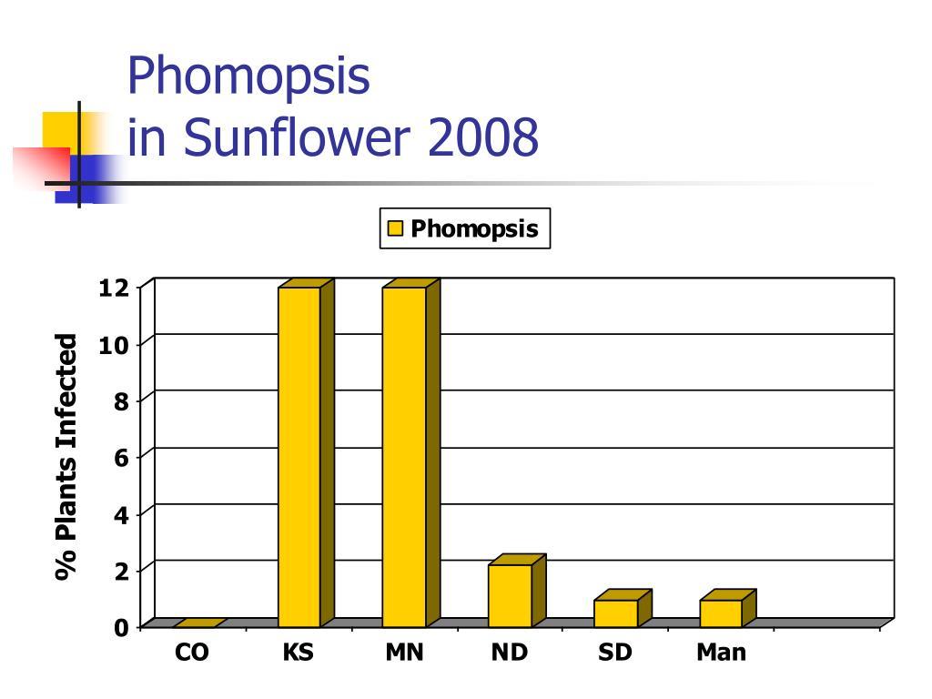 Phomopsis