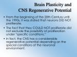 brain plasticity and cns regenerative potential