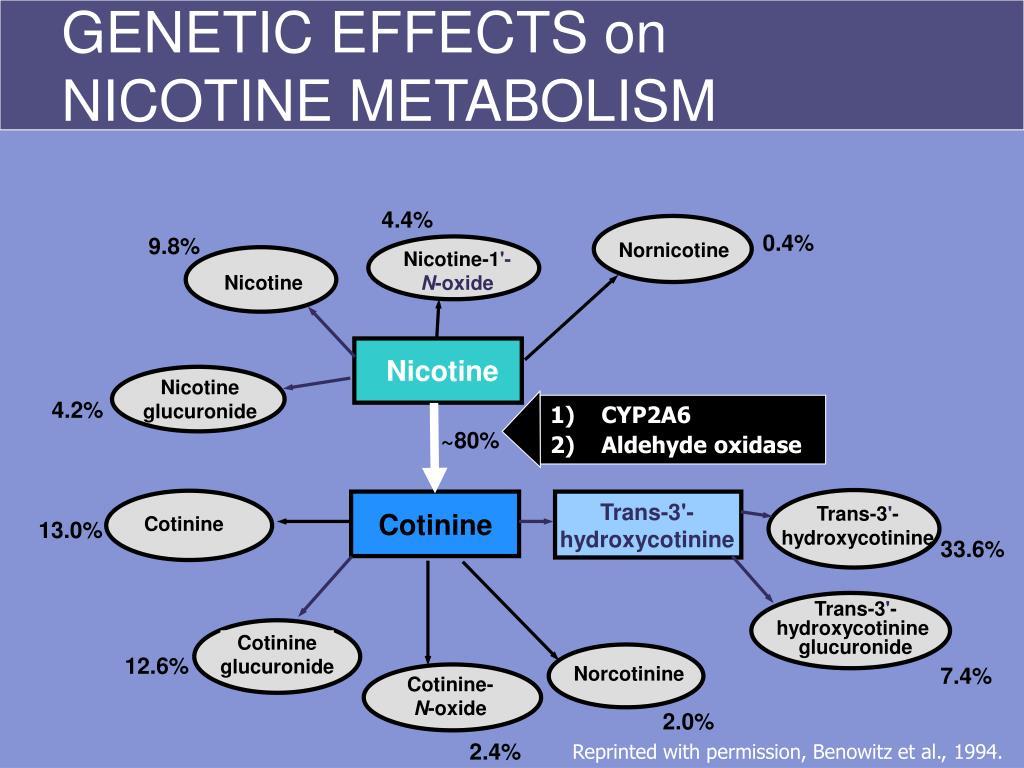 GENETIC EFFECTS on NICOTINE METABOLISM