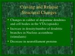 craving and relapse structural changes