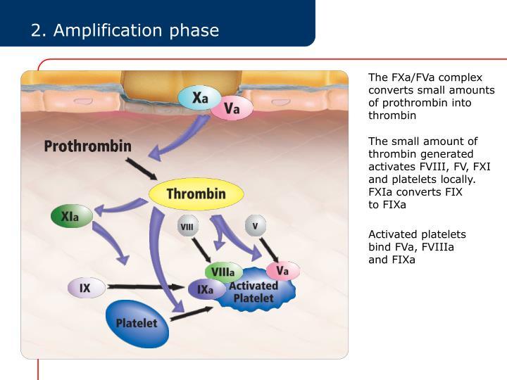 The FXa/FVa complex