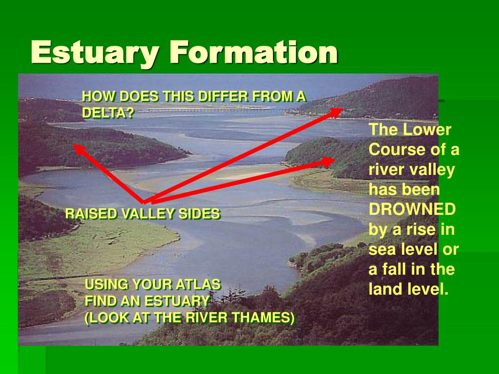 Estuary Formation
