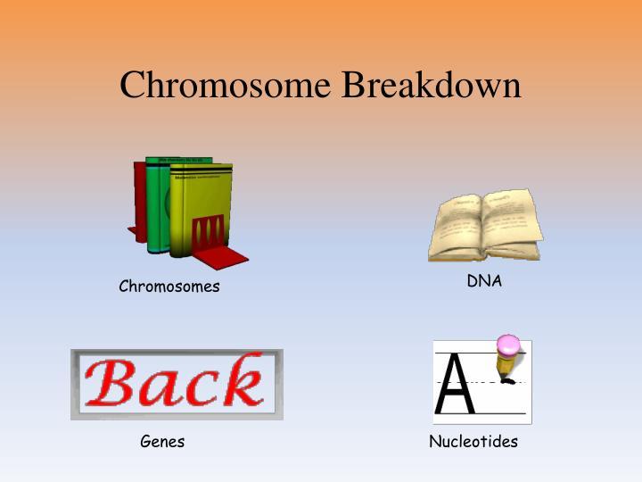 Chromosome Breakdown