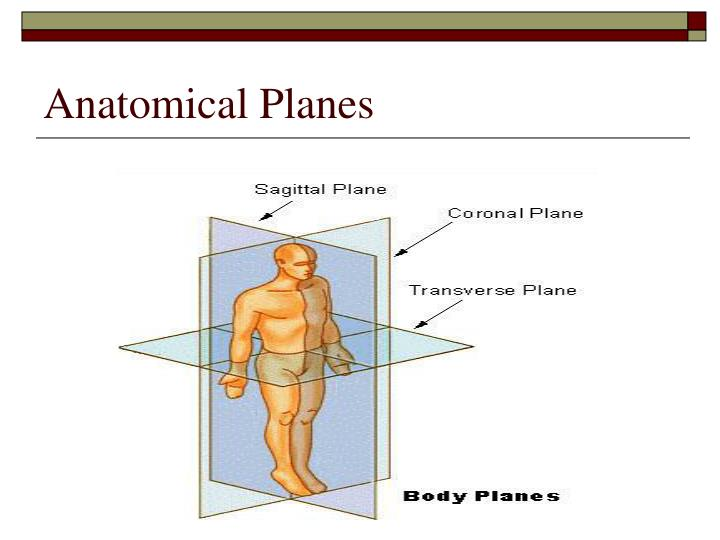 Anatomical Planes