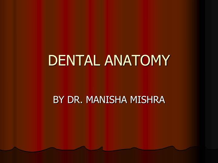 dental anatomy n.