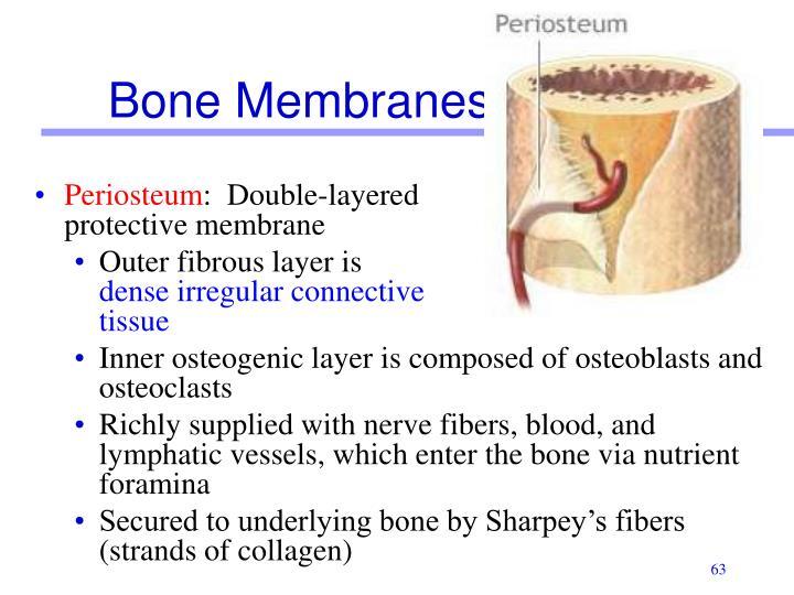 Bone Membranes