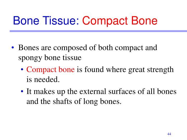 Bone Tissue: