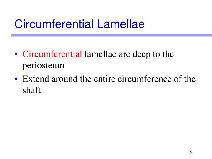 Circumferential Lamellae