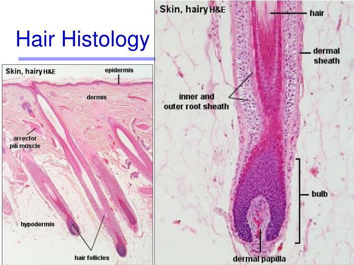 Hair Histology
