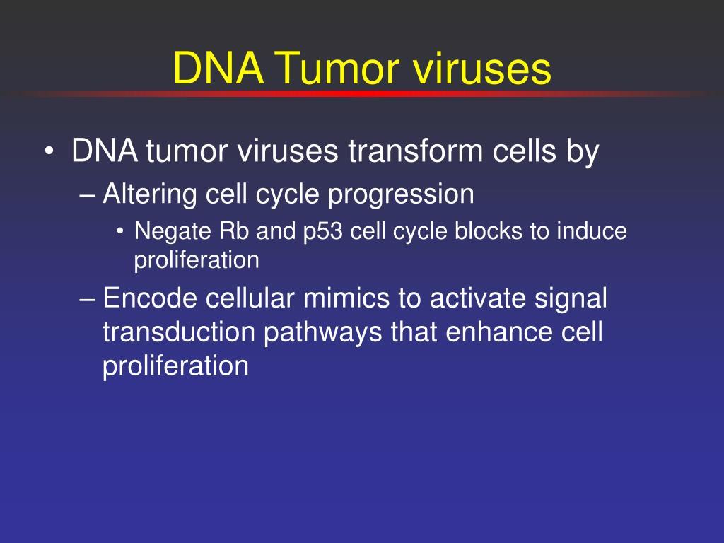 DNA Tumor viruses