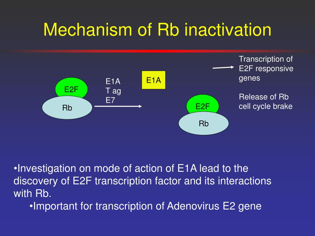 Mechanism of Rb inactivation