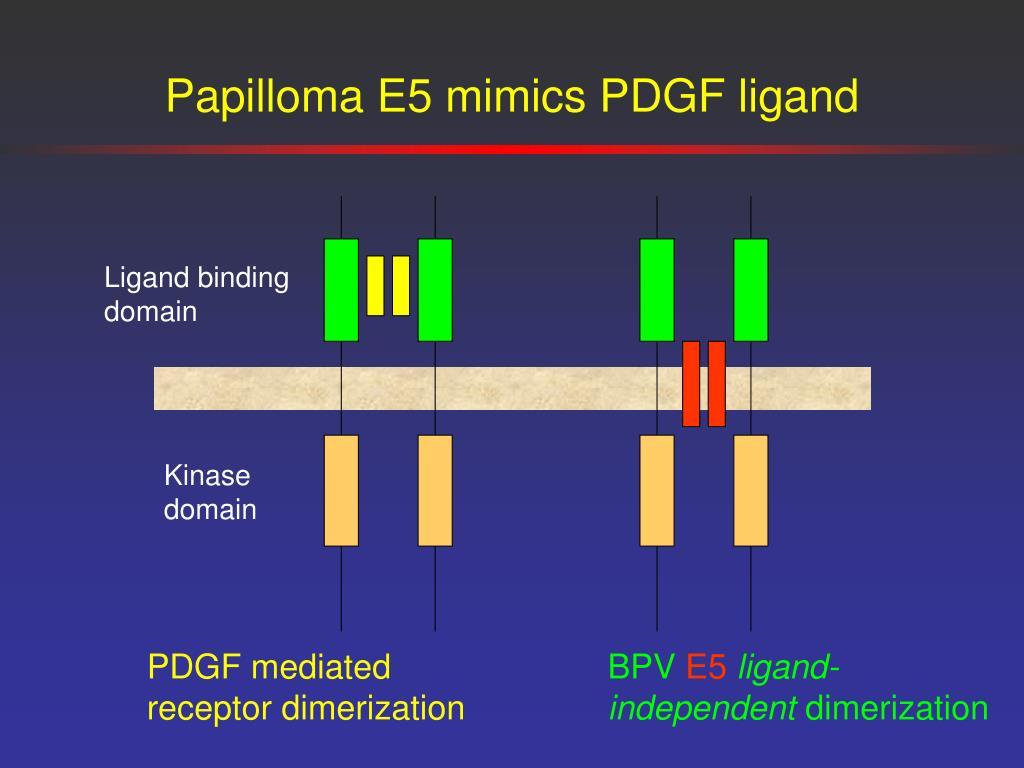 Papilloma E5 mimics PDGF ligand