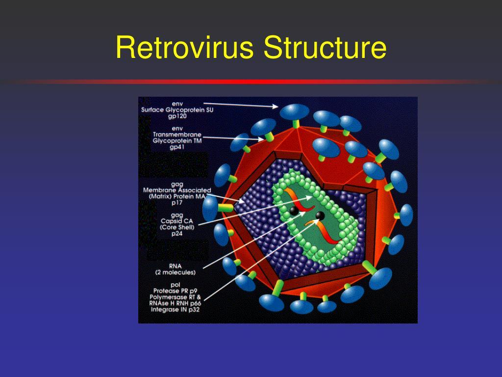Retrovirus Structure